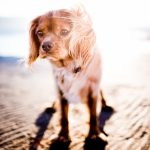 סכנות עונת הקיץ עבור כלבים
