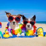 10 טיפים לגידול חיות מחמד בחודשי הקיץ החמים