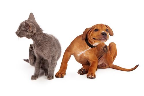 מוצרי הדברה לכלבים וחתולים
