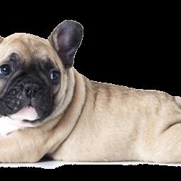 מנויים לגורים כלבים